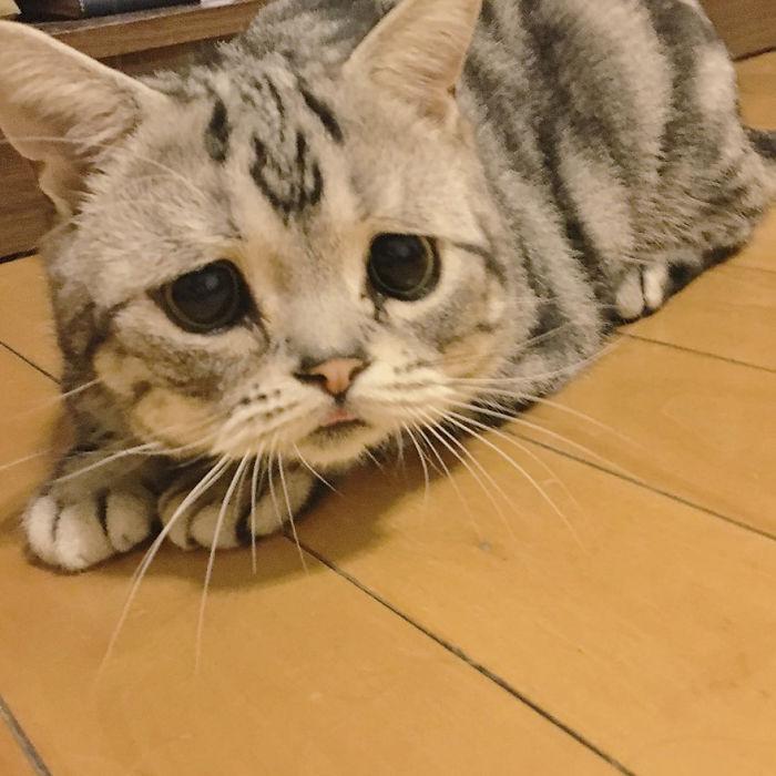 Saddest-cat-luhu-maggie-liu-lanlan731