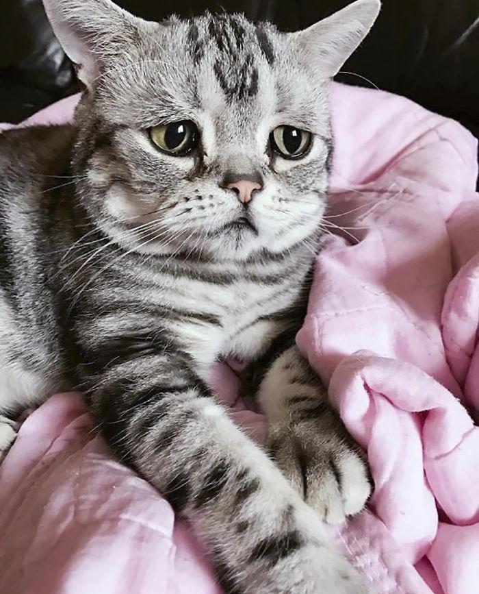 Saddest-кошка-luhu-Мегги-ЛИУ-lanlan731, Луху, кошка, чьи фотографии разобьют ваше сердце