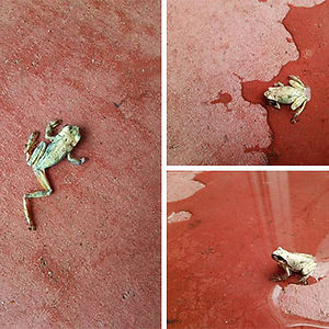 """This Frog Was Found All Dried Up And Withered Outside The Store In The Morning. The Store Manager Said, """"Let's Try Splashing Some Water On It,"""" And Holy Sh*t It Came Back To F*cking Life"""
