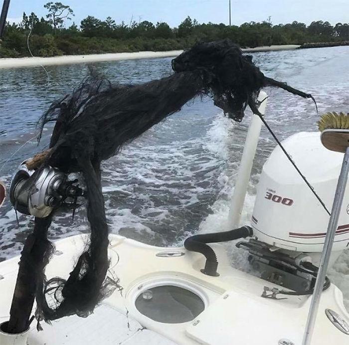 En Esta Caña De Pescar Cayó Un Rayo
