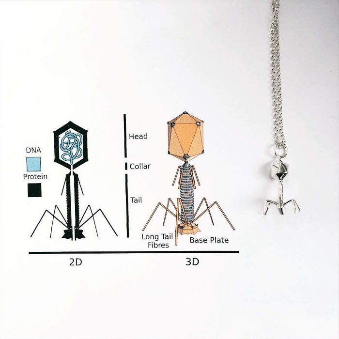 Bacteriophage Necklace
