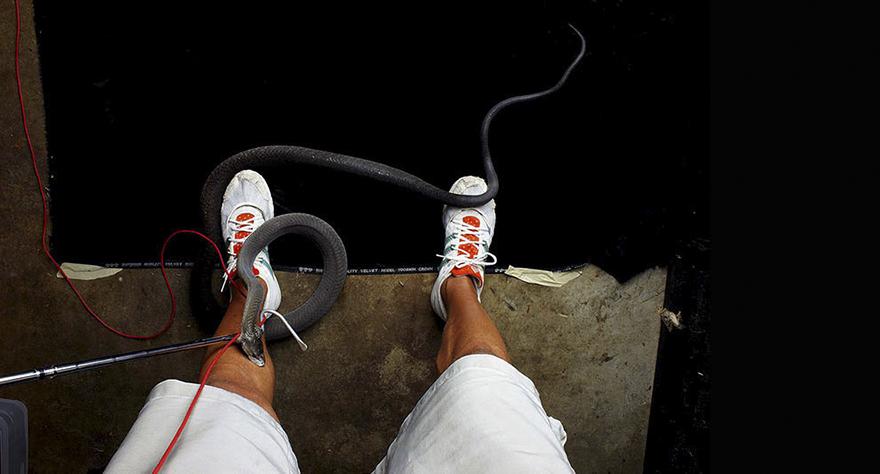 Bị cắn bởi loài rắn độc nhất thế giới nhưng nhiếp ảnh gia này vẫn cố gắng hoàn thành bộ ảnh tuyệt đẹp - Ảnh 2.