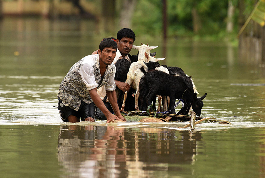 People Use A Makeshift Raft To Transport Goats As They Wade Through A Flooded Road In Jakhalabandha Area In Nagaon District, In The Northeastern State Of Assam, India