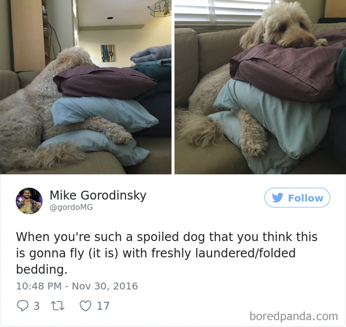 Spoiled-dogs-that-live-better-than-you