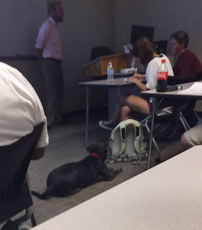 student-professor-dog-hurricane-irma-10