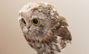 10+ Unusual Cat And Bird Hybrids Bred In Photoshop (Add Yours)