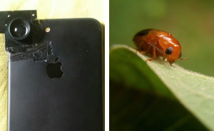 This Hack Lets You Take Amazing Macro Photos With Any Smartphone