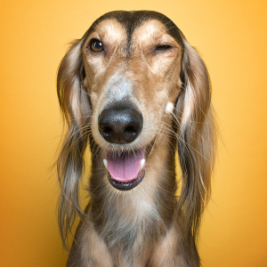 We Proved That Every Dog Has Its Own Human-Like Personality Through Funny Portraits
