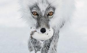 Anuncian las 13 mejores fotos de fauna de 2017, y son realmente notables