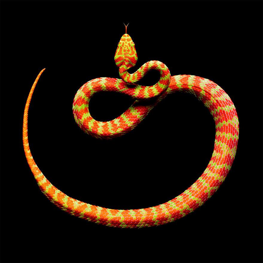 Bị cắn bởi loài rắn độc nhất thế giới nhưng nhiếp ảnh gia này vẫn cố gắng hoàn thành bộ ảnh tuyệt đẹp - Ảnh 10.