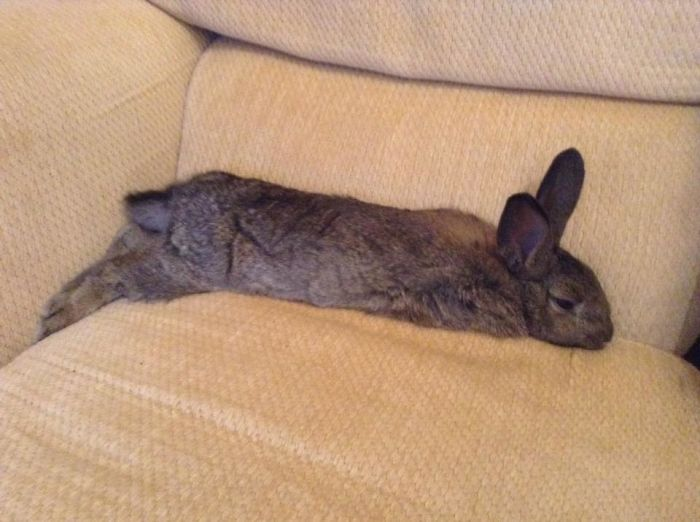 Button Decided That The Sofa Now Belonged To Him.