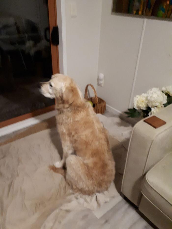 No… I Didn't Fart. Now Open The Door