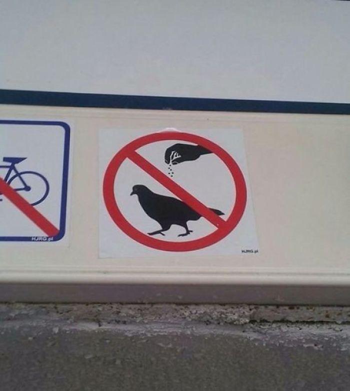 Please Don't Season The Birds