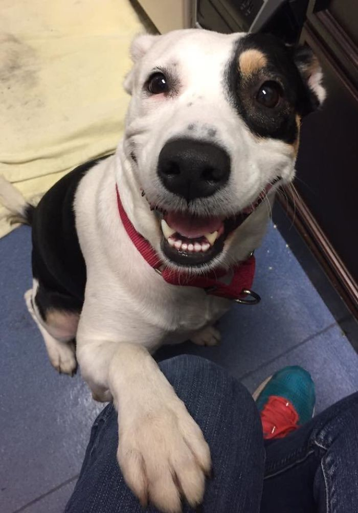 The Face Of A Newly Adopted Pupper