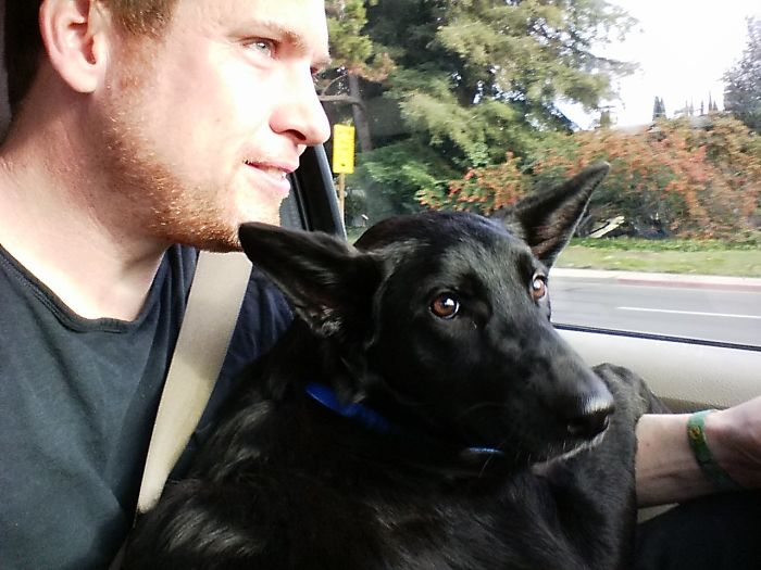 All 46lbs (21kg) Wanted To Sit On My Lap On The Way Home From Being Adopted. I Love My New Best Friend