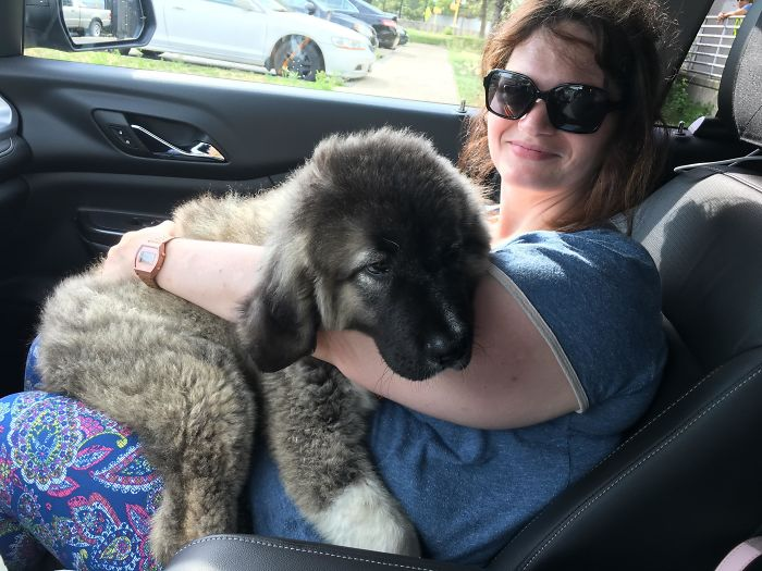 My Wife Bringing Our New Pupper Home