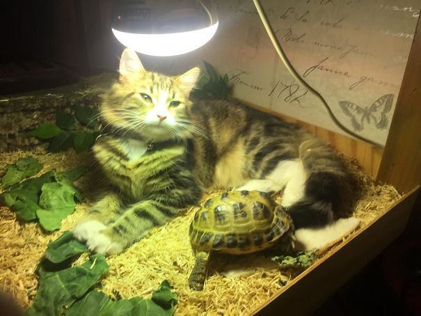 Kicked Out From Under Her Own Heat Lamp