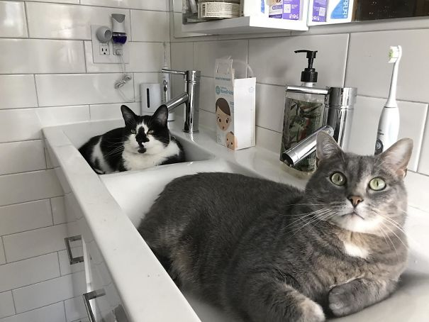 Spent $6K Remodeling The Bathroom Glad These Jerks Are Comfortable
