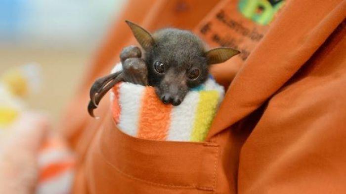 Adorable Bats