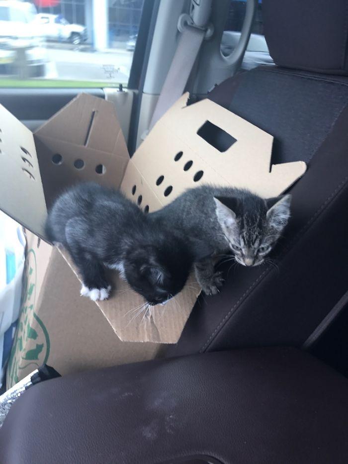 Quería sorprendes a mi esposa con un gato, pero no fui capaz de separar a estos dos