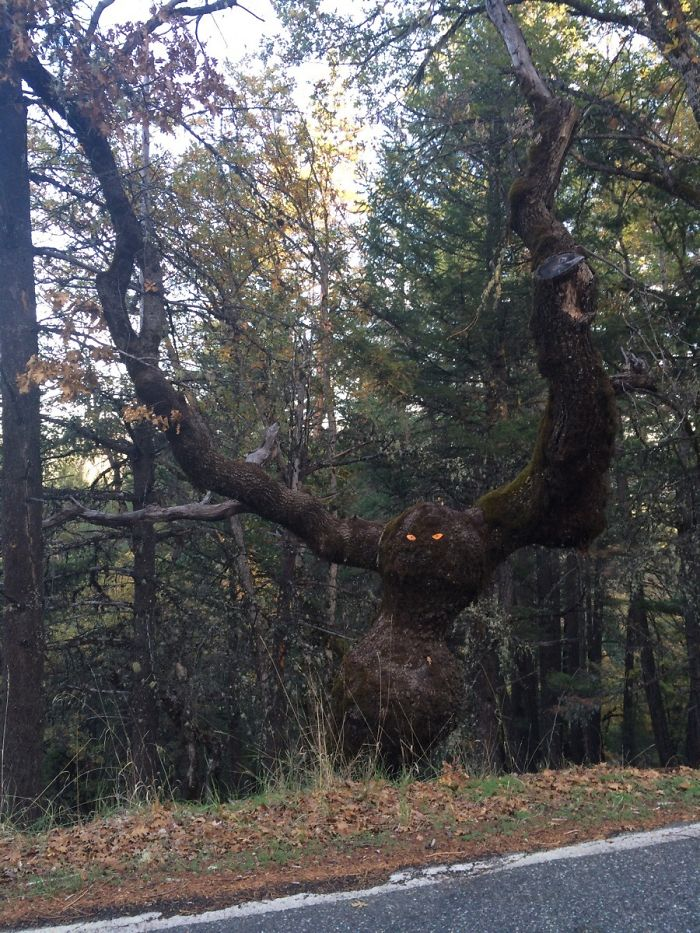 Whoever Put Those Eyes In The Tree: F*** You!