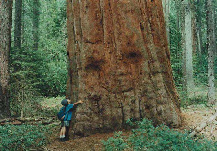Mr. Big Ass Tree Welcomes A Child's Big Ass Hug