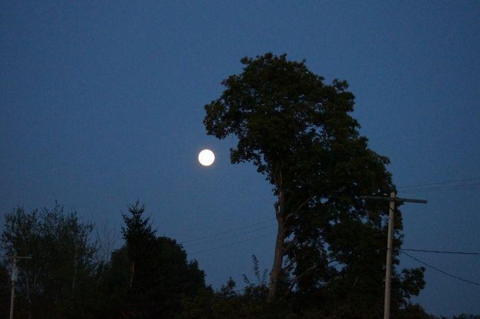 Godzilla Tree Eats The Moon! Om Nom Nom Nom!