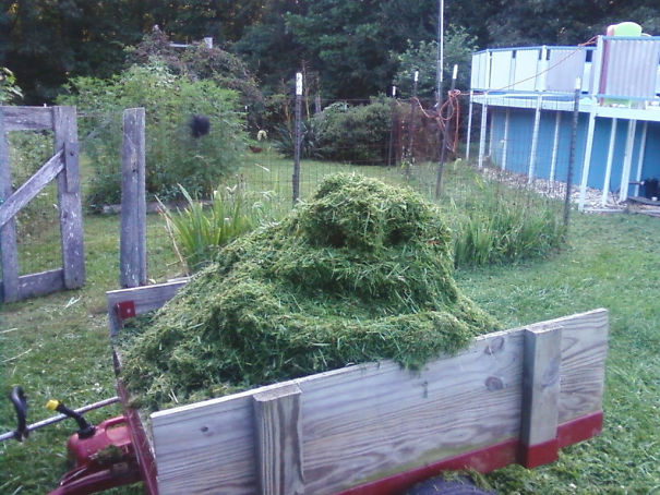 My Uncle Sent This To Me Today. He Calls It Jabba The Grass