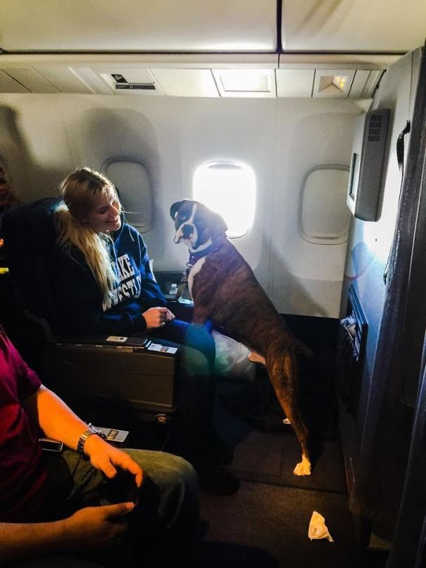 The Cutest Passenger On The Plane