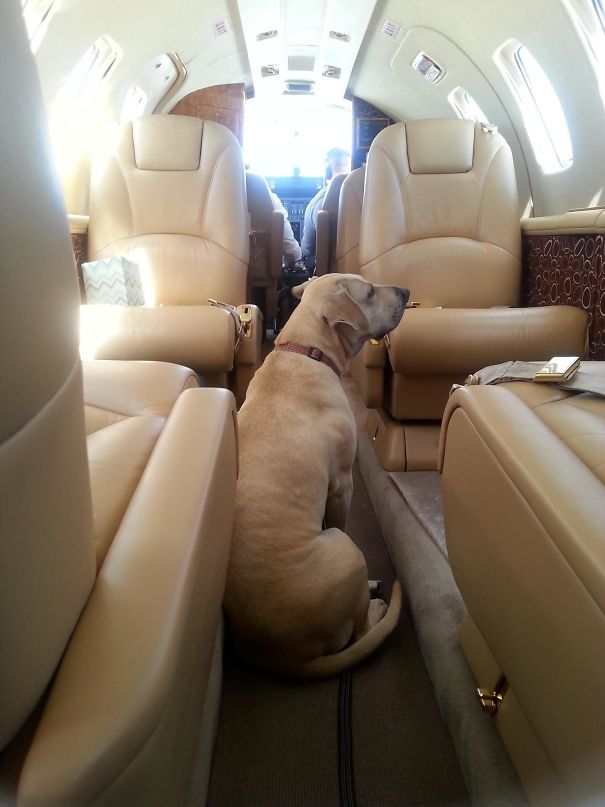 I Hit The Karma Lottery And Was Given A Free Flight On A Private Jet To Get My Dog Out Of State From A Bad Foster Situation