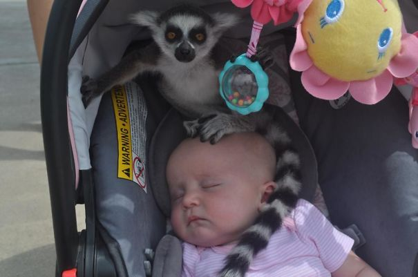 """My Friend Had Her Daughters At A Zoo When She Heard, """"Ma'am, There's A Lemur On Your Baby."""""""