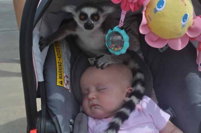 """Llevó a su hija al zoo cuando alguien le dijo: """"Señora, hay un lémur en su bebé"""""""