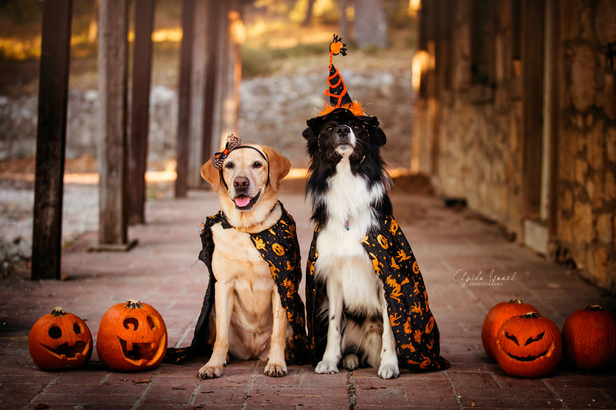 I Photograph My Dogs And Their Friends In Halloween Mood!