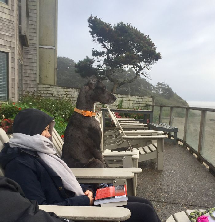My Granddog Enjoying The Beach View.