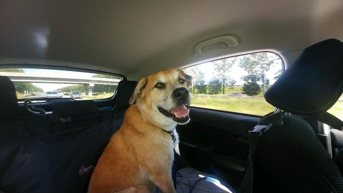 Billy, 9 Years, Ready To Go To His New Home
