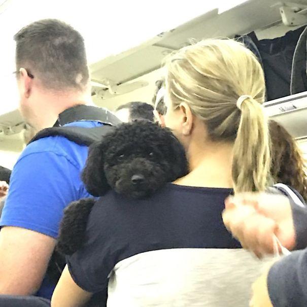 This Smol Doggo I Saw On A Plane