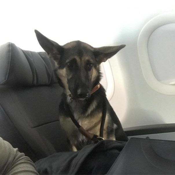 Here We Have A Very Nervous Passenger Onboard