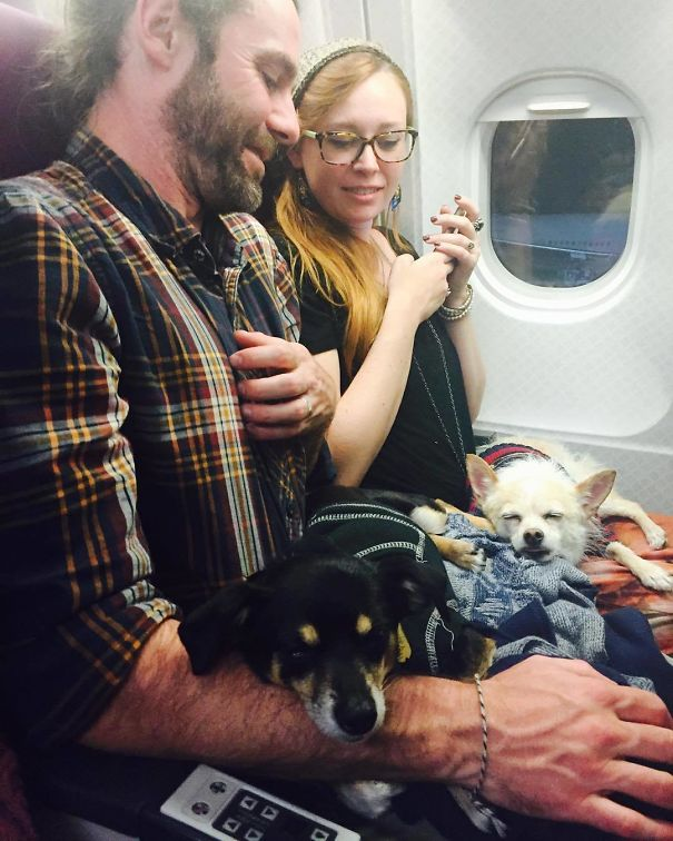 Dogs On A Plane. Well I've Never Seen That Before