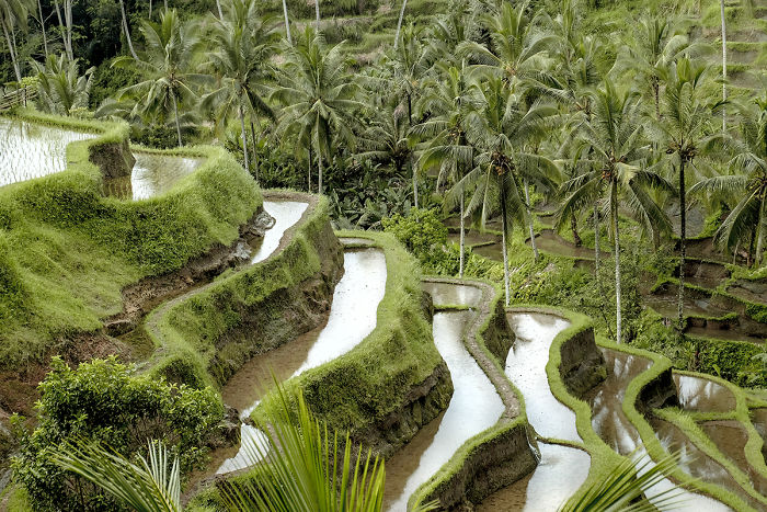 We Photographed The Most Beautiful Rice Terraces In Bali