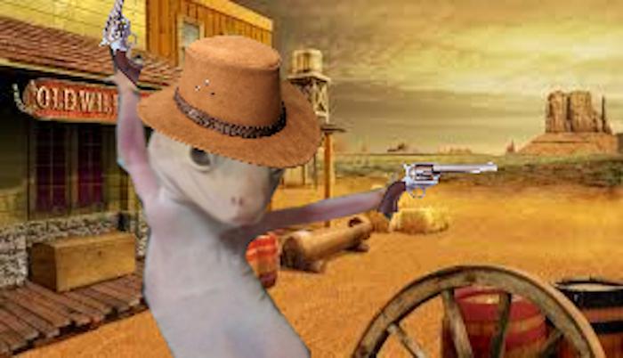 Rootin' Tootin' Gecko Shootin'
