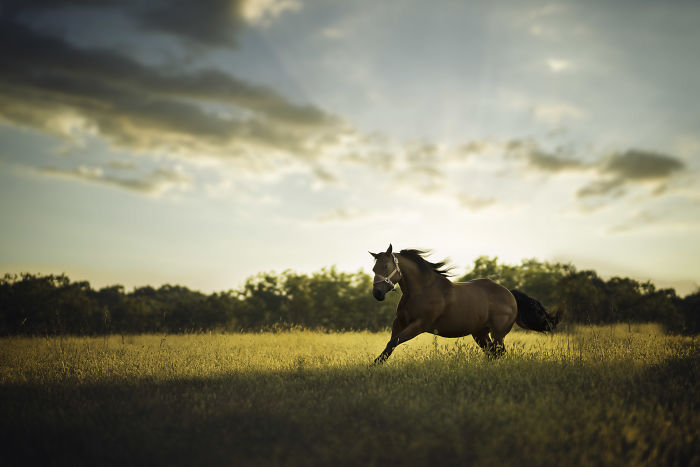 10+ Photos Showing What Happens When A Portrait Photographer Is Asked To Photograph A Horse