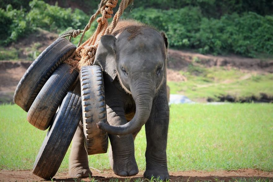 My Job Is To Travel The World Saving Animals