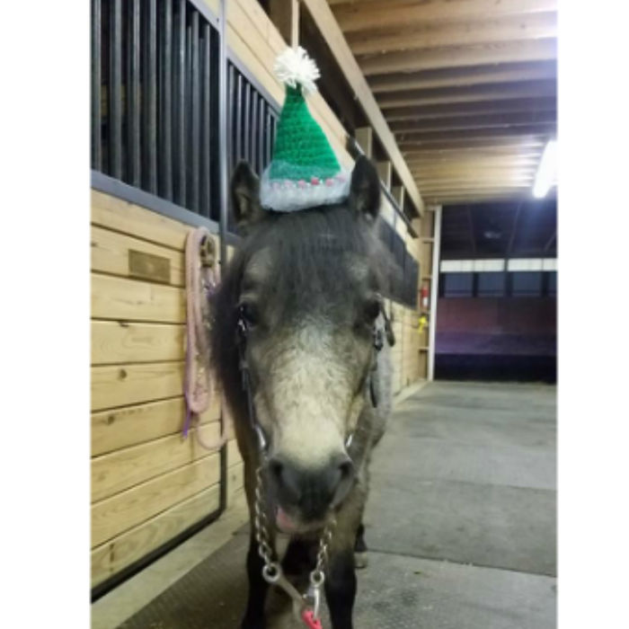 I Designed Some Crocheted Hat Headbands And One Of My Pattern Testers Made Them So Much More Awesome By Putting Them On Her Horses.