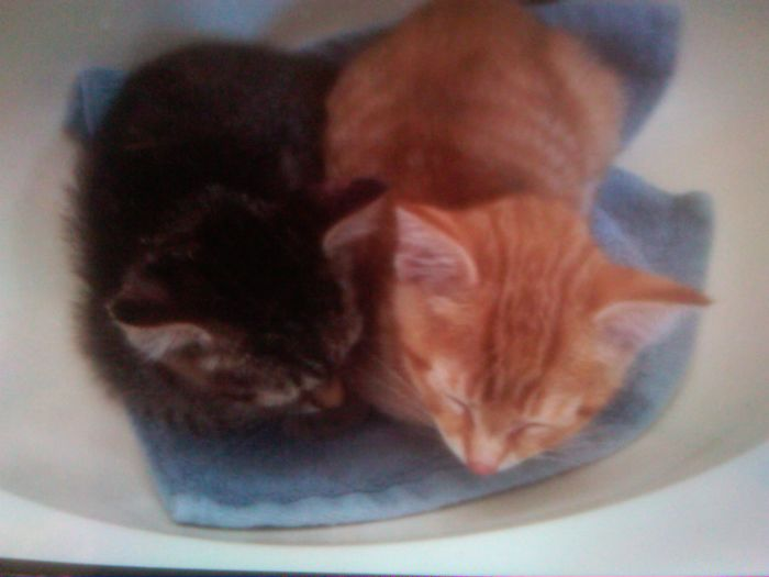 Storm And Sky Sleeping On A Washcloth When We First Got Them…4 Years Ago…