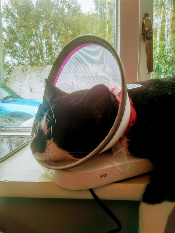 James, Annoyed About The Cone, Pulled Out The Cable To The Hub And Is Sleeping On It So I Cannot Plug It In. Well Played