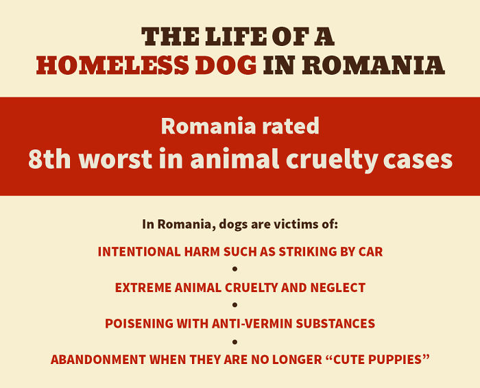 Life Of A Romanian Homeless Dog (Infographic 1 Of 3)