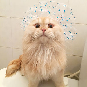 Meet Meepo, The Crazy Cat Who Loves Taking Showers