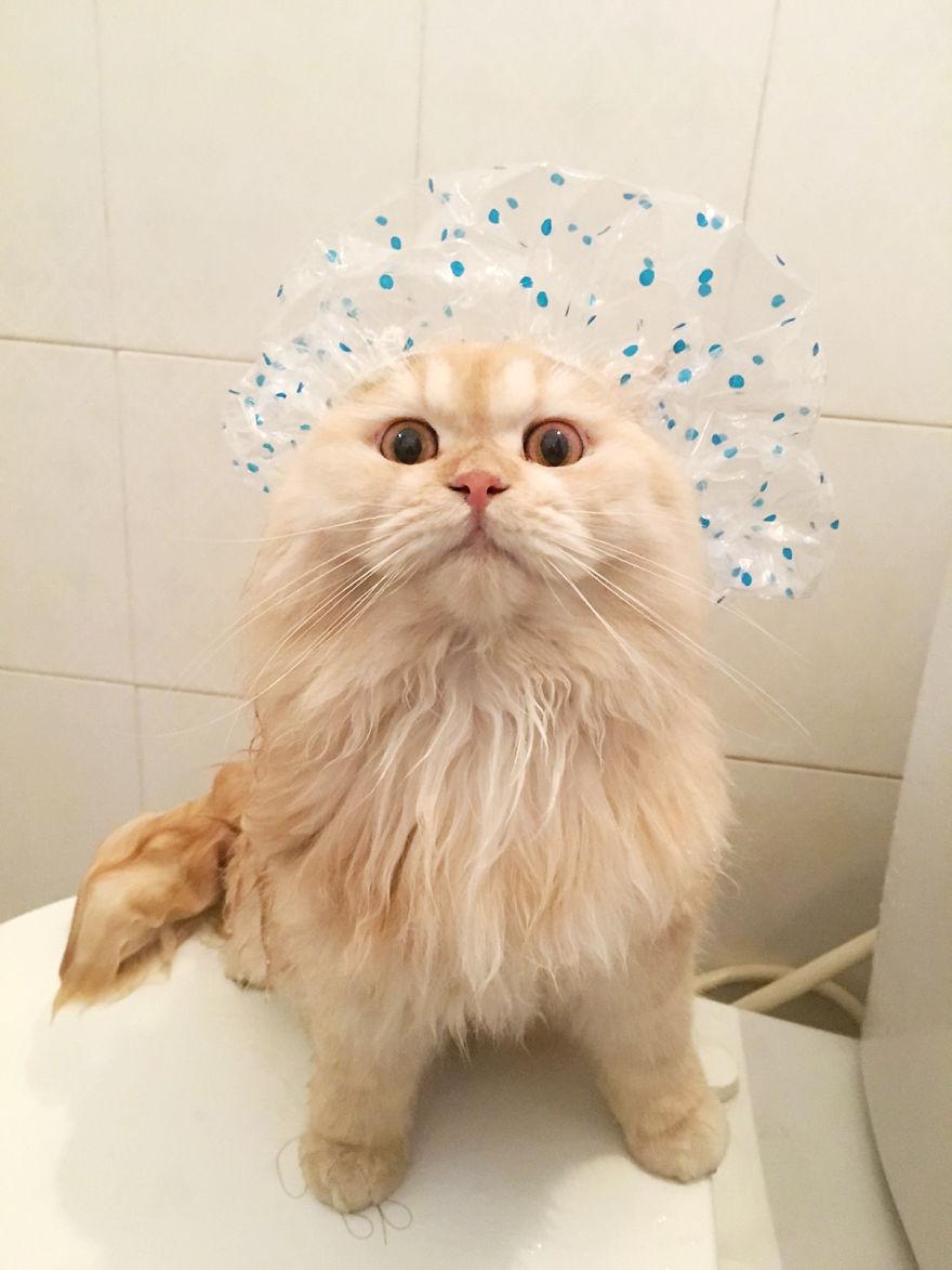 Картинки по запросу Знакомьтесь — Meэпо, сумасшедший кот, который любит принимать душ