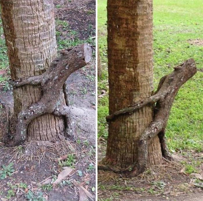 A Rare Horny-Tree