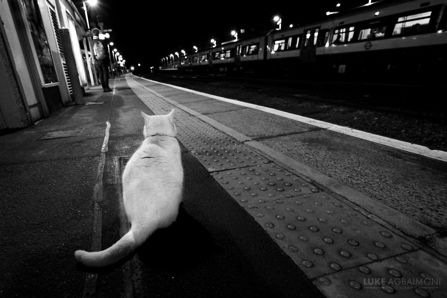 Brockley Overground Station - Cat Waits For Train